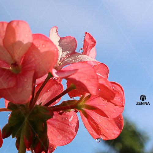 foto-cvetov-Zenina-2