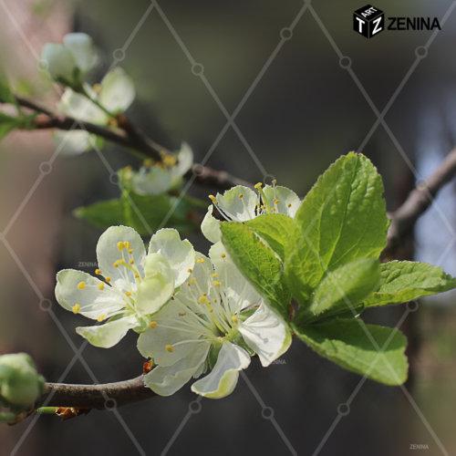 foto-cvetov-Zenina-7