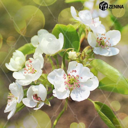 foto-cvetov-Zenina-8