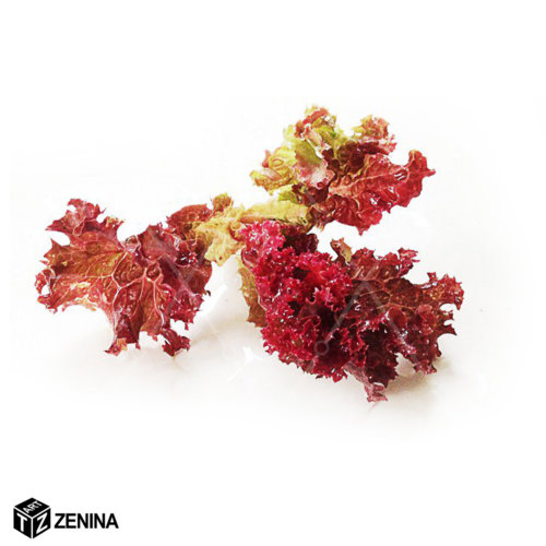 fud-stajl-Zenina-5
